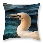 Gannet Swim Throw Pillow