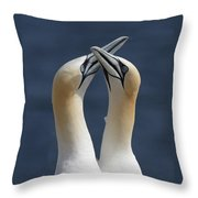 Gannets In Love Throw Pillow