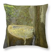 Garden Fountain Throw Pillow