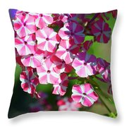 Garden Phlox Throw Pillow