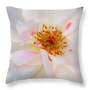 Garden Rose Blush Throw Pillow