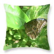 Garden With A Blue Morpho Butterfly With Wings Closed Throw Pillow