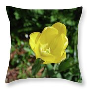 Garden With Beautiful Flowering Yellow Tulip In Bloom Throw Pillow