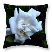 Gardenia 3 Throw Pillow