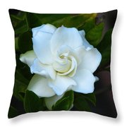 Gardenia 5 Throw Pillow