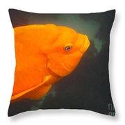 Garibaldi 1 Throw Pillow