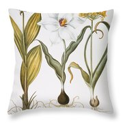 Garlic, 1613 Throw Pillow