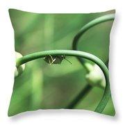 Garlic Abstract Throw Pillow