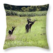 Gathering Of Bucks Throw Pillow