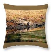 Gator 5 Throw Pillow