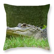 Gator 65 Throw Pillow