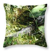 Gator Baby Throw Pillow