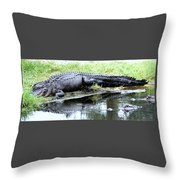Gator On The Shore Throw Pillow
