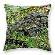Gators 11 Throw Pillow