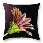 Gazania On Dark Background 2 Throw Pillow