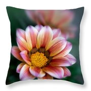 Gazania Petals Vii Throw Pillow