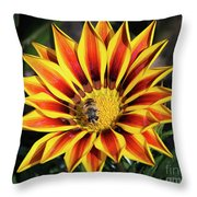 Gazania With Insect Throw Pillow