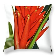 Geiger Tree Blossom In Huntington Botanical Gardens In San Marino-california Throw Pillow