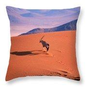 Gemsbok Throw Pillow