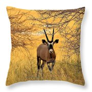 Gemsbok Standoff Throw Pillow