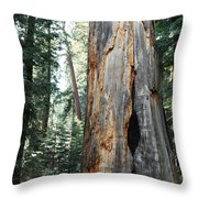 General Grant Grove Sequoia Throw Pillow