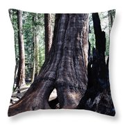 General Grant Grove Sequoia Window Throw Pillow