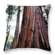 General Grant Grove Streaming Light Throw Pillow