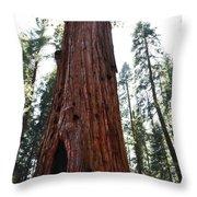 General Sherman Tree Portrait Throw Pillow
