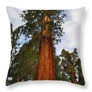 General Sherman Tree Throw Pillow