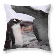 Gentoo Penguin Chick Under Whale Vertebrae Throw Pillow