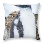 Gentoo Penguin With Turned Head On Snow Throw Pillow