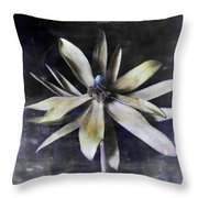 Genus Protea Throw Pillow