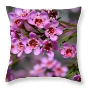 Geraldton Wax Flowers, Cwa Pink - Australian Native Flower Throw Pillow