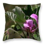 Geranium Blossom Throw Pillow