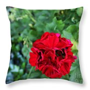 Geranium Flower - Red Throw Pillow