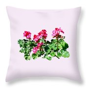 Geraniums In A Row Throw Pillow
