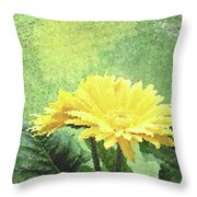 Gerber Daisy And Reflection Throw Pillow