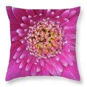 Gerber Daisy - Sweet Memories 01 Throw Pillow