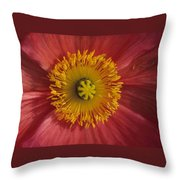 Gerber Greetings Throw Pillow