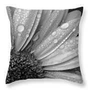 Gerbera Daisy After The Rain 2 Throw Pillow