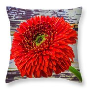 Gerbera Daisy Against Old Wall Throw Pillow