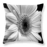 Gerbera Daisy Throw Pillow