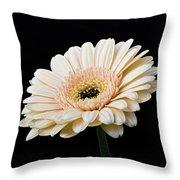 Gerbera Daisy On Black II Throw Pillow