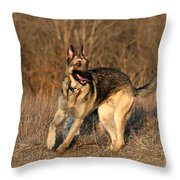 German Shepherd 1 Throw Pillow