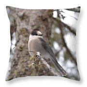 Get My Good Side-grey Jay Throw Pillow