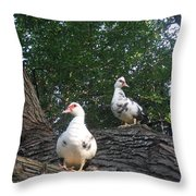 Getting A Better View Throw Pillow