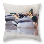 Getting Ready For The Day Throw Pillow