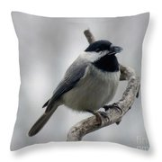 Getting Ready To Crack - Black-capped Chickadee Throw Pillow
