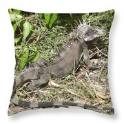 Getting Some Sun Throw Pillow