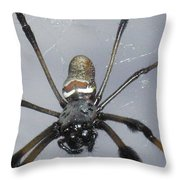 Getting To Know A Golden Orb Weaver Throw Pillow